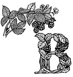 Blackberries on a branch b vector