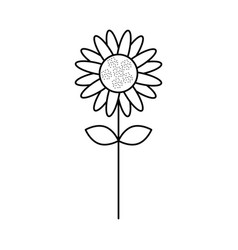 cute sunflower isolated icon vector image