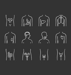 Healthy human organs chalk icons set intestines vector