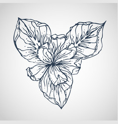 iris hand drawn vector image