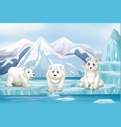 scene with three polar bears on ice vector image