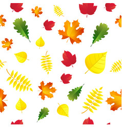 seamless autumn leaves pattern isolated on white vector image