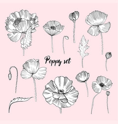 Set of various poppy contour flower collection vector