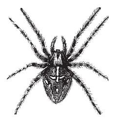 Spider vintage vector