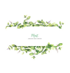 Watercolor banner of mint branches isolated vector