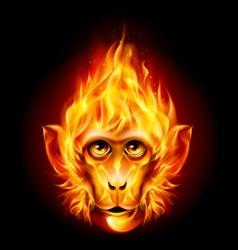 Redhead fire monkey vector image