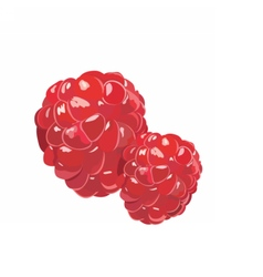 Fresh Realistic Raspberry vector