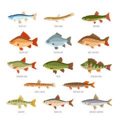 Freshwater fish set isolated on white background vector