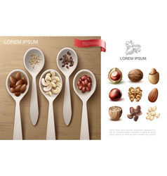 realistic natural nuts colorful concept vector image