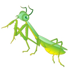 Praying mantis grasshopper cartoon vector image