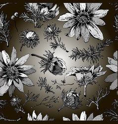 beautiful seamless pattern with flowers adonis vector image