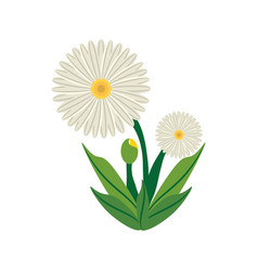 Daisy flower image icon vector