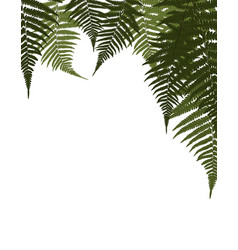 Fern leaf background vector