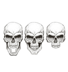 One skull in different guises vector