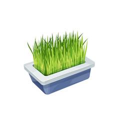 Pet grass bowl cats care animals food supplement vector