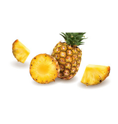 Pineapple on a white background vector