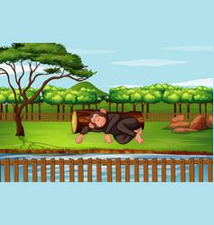 Scene with chimpanzee sleeping in park vector