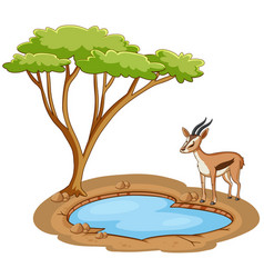 scene with gazelle standing pond vector image