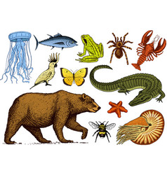 Set of animals reptile amphibian mammal insect vector