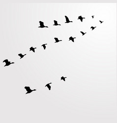 silhouette flocks of birds flying birds flying vector image