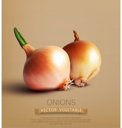 two onions vector image