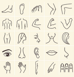 human body icons vector image