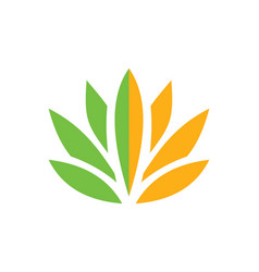 Lotus flower beauty color logo vector