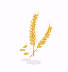 realistic ear wheat on white background vector image