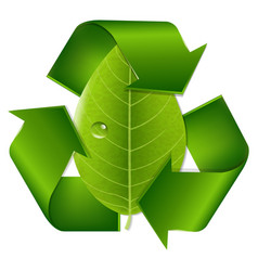 recycle symbol with leaf vector image