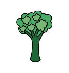 Colorful vegetable broccoli icon vector