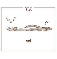 eel sketch fish icon or conger vector image