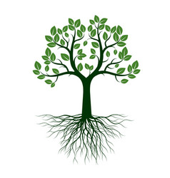 Green tree with leaves and roots outline vector