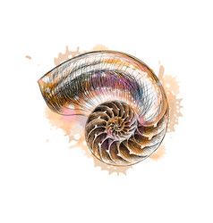 nautilus shell section isolated on black vector image