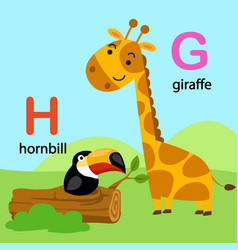 isolated alphabet letter g-giraffe h-hornbill vector image