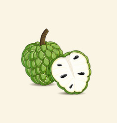 Custard apple vector