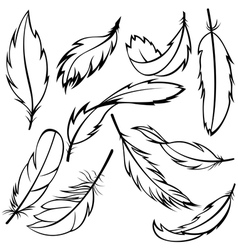 Feathers set vector