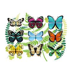 tropical butterflies spescies set vector image