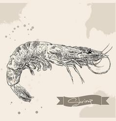 vintage shrimp drawing hand drawn vector image