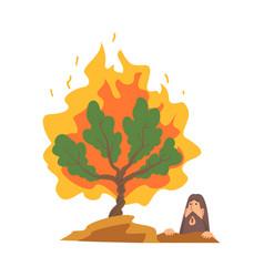 Burning bush not consuming flames as narrative vector