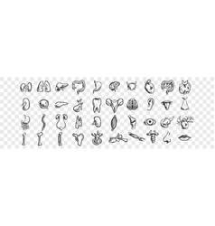human organs doodle set vector image
