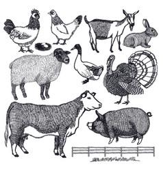 organic farm animals hand drawing vector image