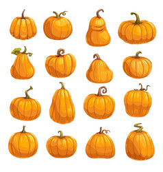 pumpkin vegetable icons autumn squash or gourd vector image