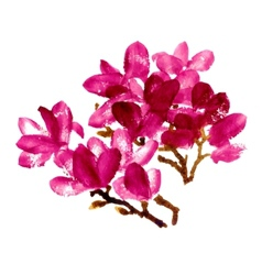 Red watercolor magnolia vector image