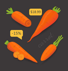Set carrot sliced carrot vector