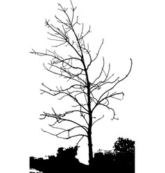 silhouettes of trees on subtle background tree vector image