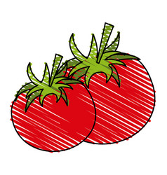 tomato food doodle vector image vector image