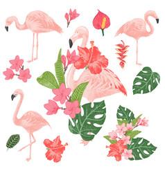 tropical flamingos set vector image