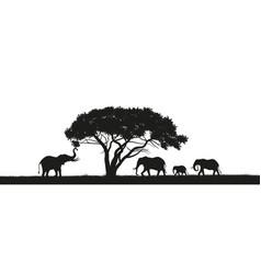 black silhouette of elephants in savannah vector image