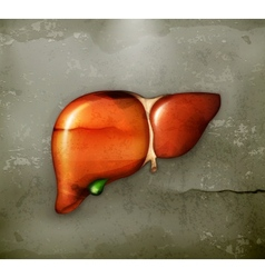 Human liver old-style vector image vector image