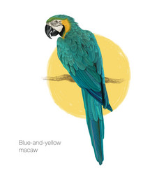 Blue-and-yellow macaw hand drawn painting vector